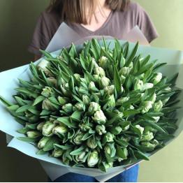 Тюльпаны Пэррот